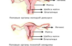 Размер шейки матки и климакс