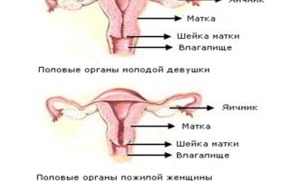 Размер матки в период менопаузы