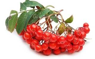 Полезные свойства рябины красной при климаксе
