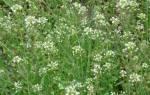Кровоостанавливающие травы при маточных кровотечениях при климаксе
