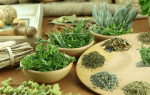 Сбор травы при цистите у женщин