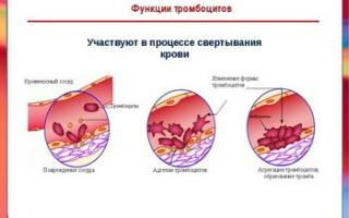 Норма тромбоцитов у женщин в менопаузе