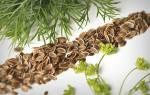 Польза семян укропа при климаксе